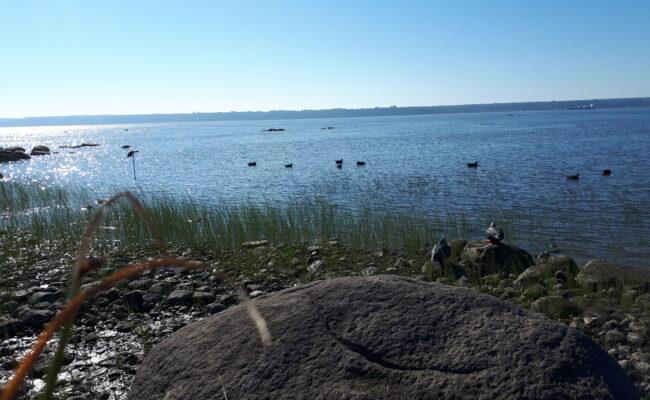 Chasse au fleuve 15 septembre 2018 – 2